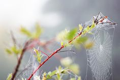 Morning Dew on Spider Web by Andrew Russell on 500px