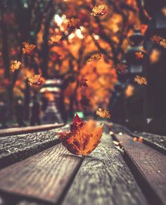 Halloween Fall Backgrounds Like If You Wallpaper In