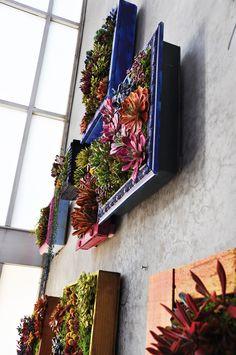 succulent frames wall installation Mosaic LA Succulent Frame, Vertical Succulent Gardens, Succulents Garden, Wall Installation, Centre Pieces, Color Of Life, Frames On Wall, Fun Crafts, Mosaic