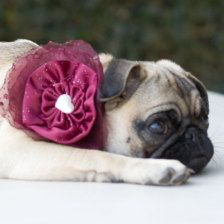 Pet Accessories for Weddings: Collars, Bow Ties, Ring Pillows - Page 5 - Etsy