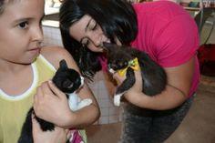 PEDRO HITOMI OSERA: Ponto Cão sedia campanha de adoção de felinos