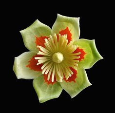Tulip Poplar Flower on Black by Mark Birkle Garden On A Hill, Garden Club, Poplar Tree, Apple Art, Tattoo You, Native Plants, Amazing Flowers, Natural Wonders, Tattoo Inspiration