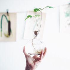 Plant Hanger, Macrame, Experiment, Plants, Home Decor, Decoration Home, Room Decor, Plant, Home Interior Design