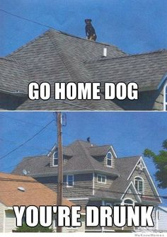 Go home dog your drunk