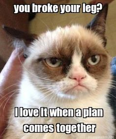 #GrumpyCat #Meme