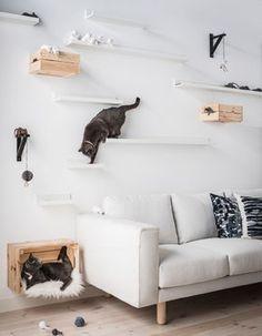 Twee katten spelen op een DHZ kattenspeeltuin van IKEA MOSSLANDA schilderijenplanken die op verschillende hoogte verspreid boven een zitbank hangen