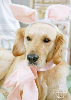 Easter Golden