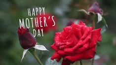 Happy Mother's Day Gif Animated Images 2019 to Wish Mom - Mothers Day Gif, Mothers Day Quotes, Happy Mother S Day, Happy Mothers, Happy Mother's Day Gif, Gif Animated Images, Hearts And Roses, I Love You Mom, Free Mom