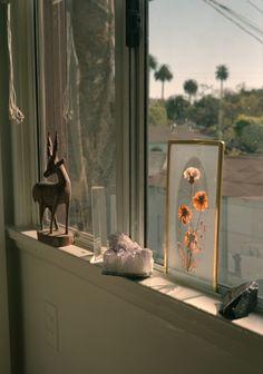 frame dried flowers