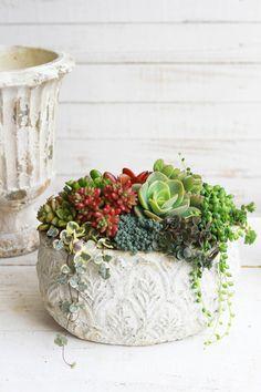 ハンドメイドマーケット minne(ミンネ)| アンティークチューリップポットの多肉植物寄せ植え