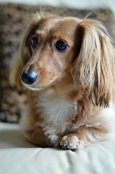 own a dachshund so they can be named Wasabi and Marcel