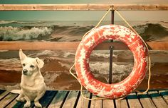 Cute looking dog as a beach guard! Cute Small Dogs, Cute Dogs, Cute Dog Pictures, Dogs And Puppies, Doggies, Picture Captions, Dog Life, Puppy Love, Dachshund