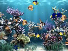 Screenshot Of Aquarium Animated Wallpaper Version 1 1 0 Aquarium Live Wallpaper, Fish Wallpaper, Free Desktop Wallpaper, Wallpaper Keren, Computer Wallpaper, Free Animated Wallpaper, Screen Wallpaper, Animated Gif, Moving Desktop Backgrounds