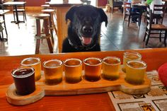 10 dog-friendly breweries in the West