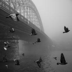 Cracow #bw #street #fog Sydney Harbour Bridge, Places To Visit, Angel, Street, Travel, Twitter, Trips, Angels, Viajes