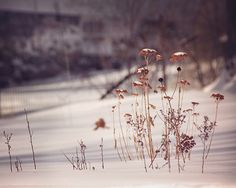 Dark Winter / Photography Print