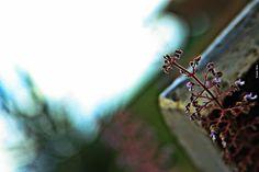 Olhares do avesso: Onde estar? espera a sorte nos dados sem sequer os lançar estamos escondidos sem lugar para chamar de lar Expects luck in the dice without even launching them We are hidden with no place to call home http://olharesdoavesso.blogspot.com.br/2017/05/onde-estar.html #poesia #poetry #poesie #poeta #poet #poet #poete #dichtung #dichter #digter #shīgē #shīrén #poeziya #espera #expects #escondidos #hidden #luck #sorte #home #lar #olharesdoavesso…