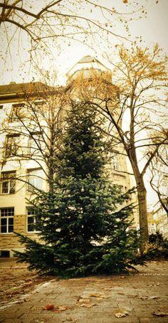 Friedensplätzchen hat wieder eine Baum