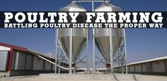 Poultry disease is something those who raise poultry are always weary of and looking to fight off. Check out this article and see what makes our products the most suitable to keep your poultry healthy and thriving. Poultry Diseases, Poultry House, Chicken Houses, Healthy, Check, Poultry Farming, Farmers, Homesteading, Ranch