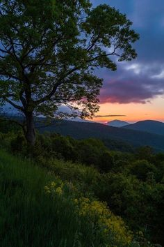 Sunrise from Thornton Hollow Overlook in Shenandoah National Park.Photo: National Park Service