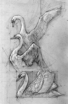 swan sketch by andrew prasetya