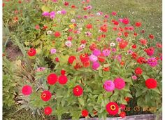 My Flower Bed