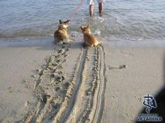 Funny Dog Photos pack-4