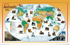 National Geographic World of Animals Wall Mural