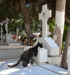 Cat drinking from grave