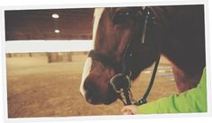 CanTRA provides support to individuals and groups through education, certification, insurance coverage, communication and accreditation. Communication, Horses, Education, Animals, Animales, Animaux, Animal, Onderwijs, Animais