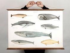 LARGE A1 Whales Canvas poster  vintage illustration von ARMINHO
