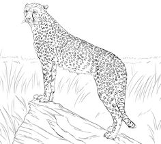 Cheetah Coloring Pages Free For Kids