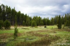 Little Gibbon Falls Trail || Yellowstone National Park || Dirt In My Shoes