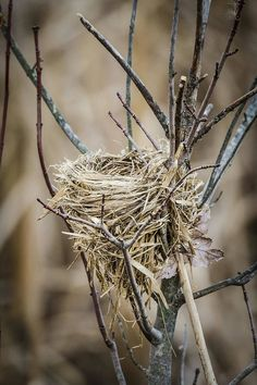 Bird Nest Craft, Bird Nests, Bird In Nest, Nester, Egg Nest, Decoupage Art, Wild Birds, Thing 1, Bird Watching