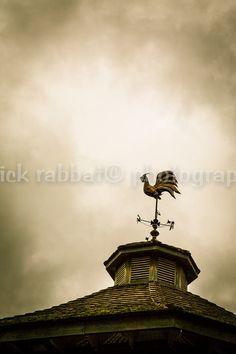 Rooster Fine Art Photography Copper Wind @patrickRabbatPhotos #etsyspecialT #integrityTT #etsymntt