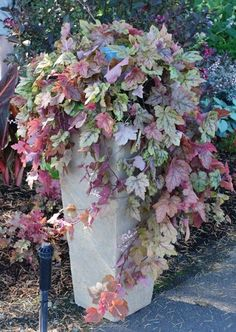 Easy To Grow Houseplants Clean the Air Heuchera Redstone Falls' Coral Bells - Trailing Coral Bells Container Plants, Container Gardening, Coral Bells Heuchera, Pot Jardin, Shade Plants, Gras, Garden Planters, Shade Garden, Dream Garden