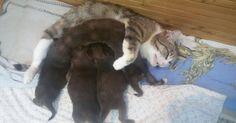 Il y a des mamans chats qui se contentent d'être des mamans chats. Et puis il y en a d'autres qui vont beaucoup plus loin. C'est le cas de Moucika, une maman pas comme les autres!