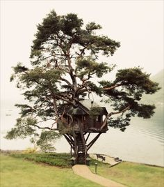 Tree house by the lake
