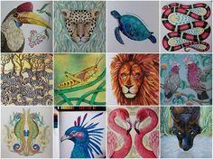 Instagram media by zuzka.hanova - I like to draw animals of Millie Marotta :-) #milliemarotta #coloring #coloringbook #adultcoloringbook #adultcoloring #pencils #fabercastell #polychromos #divokasavana #draw #drawing #animals #wildsavannah #tropicalwonderland #kohinoor