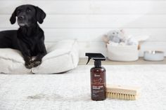 Keep your house clean when you have pets is a daily battle against dander, stains, and odor. Check out these hacks to keep your home fresh and clean when you have pets. Cleaning Litter Box, Pet Odors, Fresh And Clean, Dog Paws, Dog Walking, Pet Care, Clean House, Stains, Pets