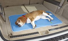 Just found this Gel Cooling Mat %3a Dog Accessories - Gel Cooling Mat -- Orvis on Orvis.com!