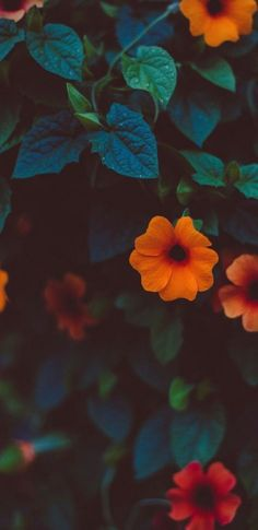 Marvelous Flower Wallpaper for Sytle Your New iPhone - Xtra Inspira Aesthetic Iphone Wallpaper, Aesthetic Wallpapers, Iphone Wallpaper Orange, Flower Aesthetic, Aesthetic Yellow, Aesthetic Vintage, Tumblr Wallpaper, Mi Wallpaper, Laptop Wallpaper