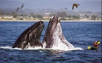 Monterey County California - Things to Do - Outdoor Activities, Animals & Wildlife, Arts & Culture, Historic Sites, Wine