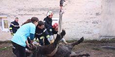 Sainte-Marthe (47) : un poney coincé dans une canalisation