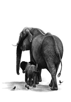 Charcoal Drawings by Ashleigh Olsen, African Wildlife Art, Elephant Mother and baby, African Elephant, drawing of Elephant, Elephant Baby, black and white art