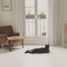 Les chats s'invitent dans la déco