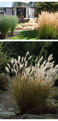 Fint med höga gräs