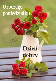 Plants, Humor, Disney, Fotografia, Polish, Good Morning, Pictures, Humour, Funny Photos
