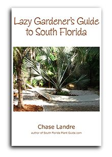 Low maintenance landscaping - try these groupings of easygoing South Florida plants to use in your design. Small Yard Landscaping, Florida Landscaping, Florida Gardening, Tropical Landscaping, Landscaping Plants, Landscaping Ideas, Tropical Garden, Low Maintenance Landscaping, Low Maintenance Plants