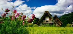 Shirakawa-go rice fields by PAkDocK @PAkDocK on 500px